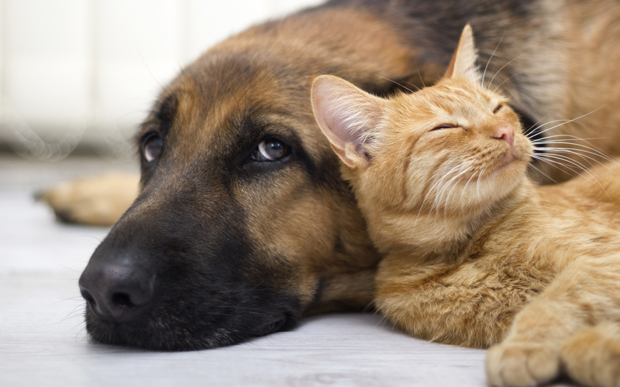 25  Adorable Dog and Cat Rescue